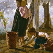 Veder cascar le olive nel paniere